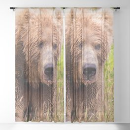 Brown Bear Kodiak Sheer Curtain