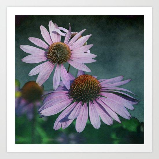 Beautiful summer with pink Echinacea / Daisy flowers Art Print