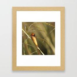 Morning Dew On Lady Bird Framed Art Print