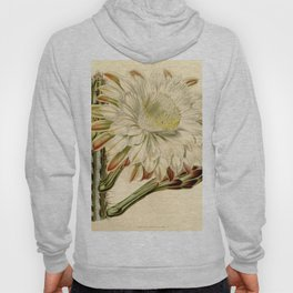 Cereus aethiops Hoody