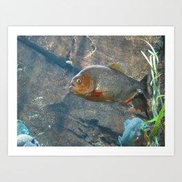 Fish 3 Art Print