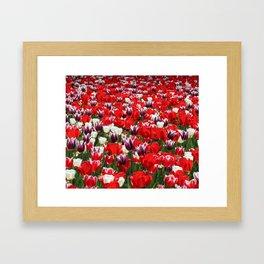 Tulip Sensation Framed Art Print