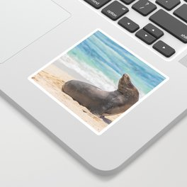 Sea lion sunbathing on beach Sticker