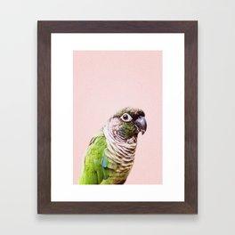 Parot Photography | Peek-a-boo | Tropical | Wildlife | Bird | Blush Pink Framed Art Print