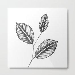 Beech tree leaves Metal Print
