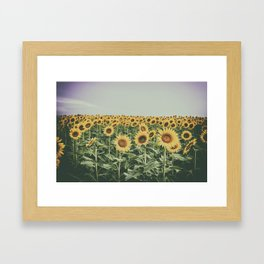 Sunflower Horizon Framed Art Print