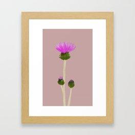 Cirsium Arvense Framed Art Print
