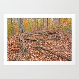 Autumn Avalon Forest Trail Art Print