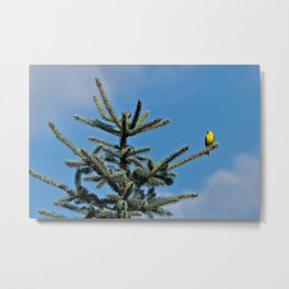 Bright Summer Morning Metal Print