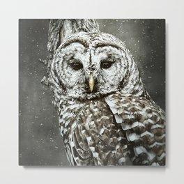 BARRED OWL  Metal Print