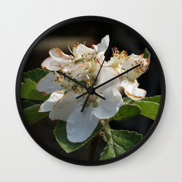 Apple tree blossom Wall Clock