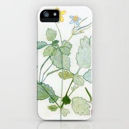 Summer celandine iPhone Case
