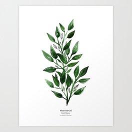Botanical II - Watercolor Leafs Art Print