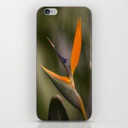 Singing Bird iPhone Skin