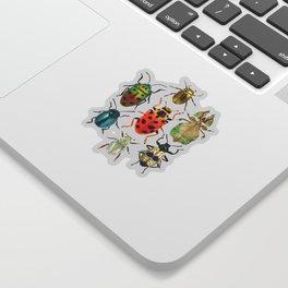 Beetle Compilation Sticker
