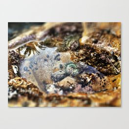 Mini Pool Canvas Print