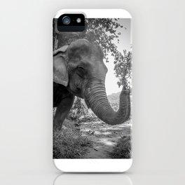 Elephant, Laos, Julie Gatto iPhone Case