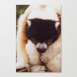 Swamp Lemur Canvas Print