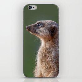 Meerkat Centurion iPhone Skin