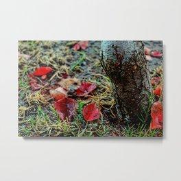 Deciduous Autumn Metal Print