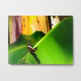 Butterfly Tanning- Photo Metal Print