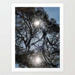 Arterial California TREES Art Print