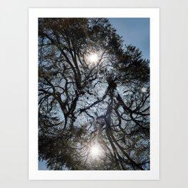 Arterial California TREES Art Print