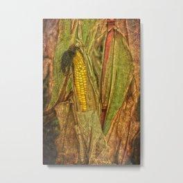 The last ear of corn Metal Print