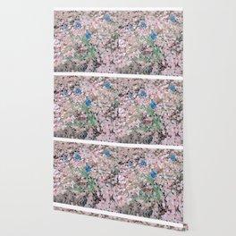 Shine : cherry blossom Wallpaper
