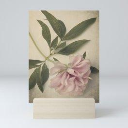 Scents of Spring - Pink Peony ii Mini Art Print