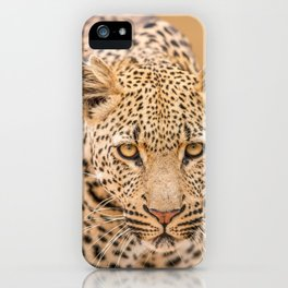 Leopard starring at you iPhone Case