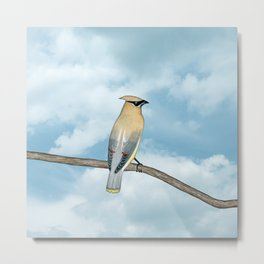 cedar waxwing and blue sky Metal Print