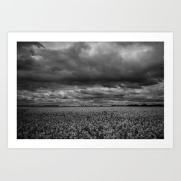 flower fields - horizontal, black and white Art Print