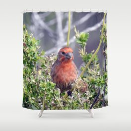 Handsome Male House Finch Shower Curtain