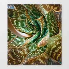 Aloe Saponaria, Soap Aloe Maculata Canvas Print