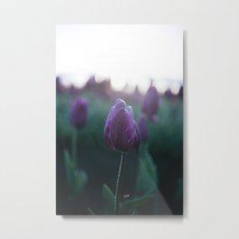 Sunrise Tulips Metal Print