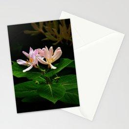 Opening Honeysuckle Stationery Cards