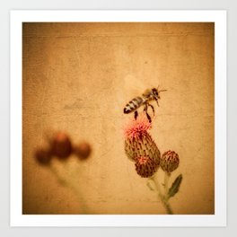 The Thistle And The Bee Art Print