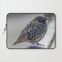 Starling. Laptop Sleeve
