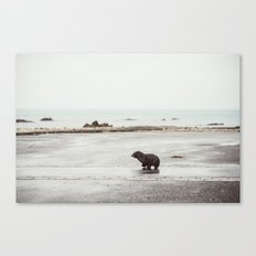 Pup seal crossing the road Canvas Print