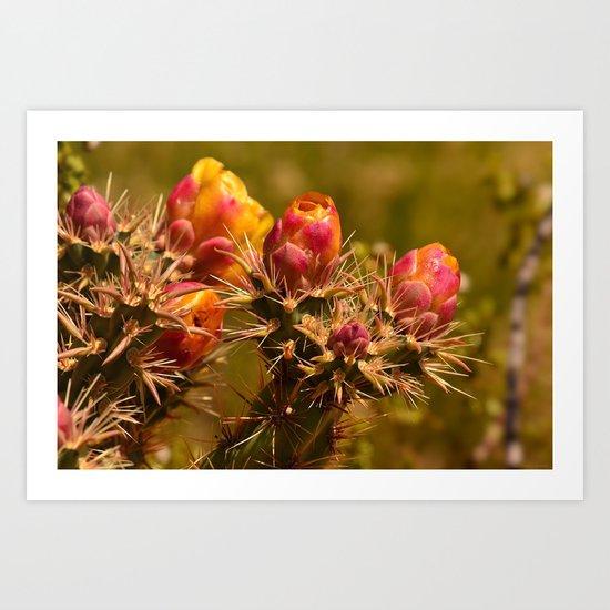 Cacti in Bloom - II Art Print
