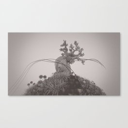 Pinus Longaeva /ˈvɒksɛl/ Canvas Print