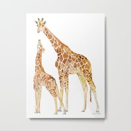 Mother and Baby Giraffes Metal Print
