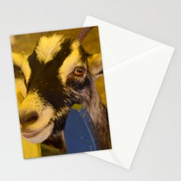 Hi there...Pet me Stationery Cards