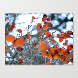Winterbeeren Canvas Print