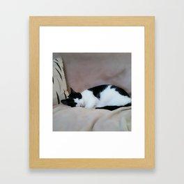 Cat Nap Framed Art Print