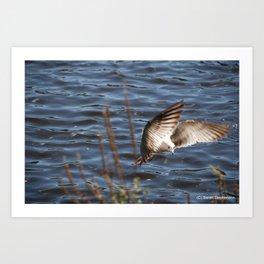 Flying Dove Art Print