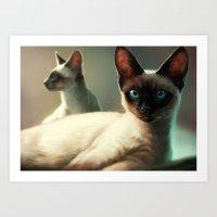 Siamese cats Art Print