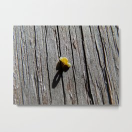 Inchworm shadow Metal Print
