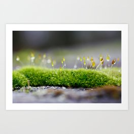Mossy Moss Art Print